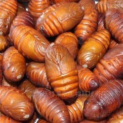 蚕蛹粉 蚕蛹蛋白 现货销售   1公斤包邮